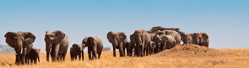 Reizen Zuid-Afrika met 333travel