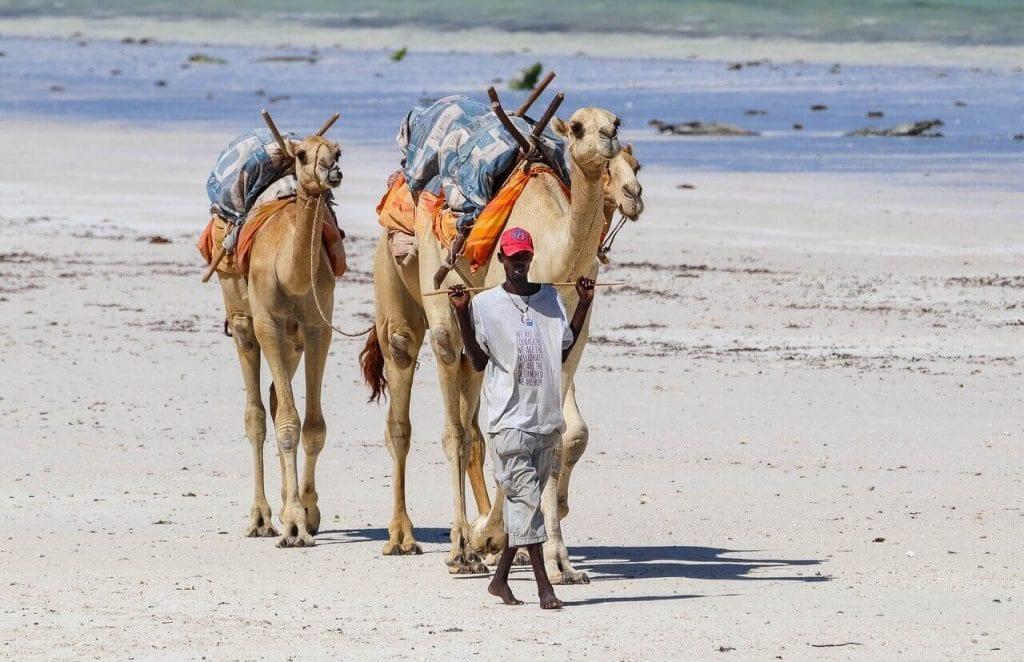 Reizen naar Kenia - stranden die heel mooi zijn