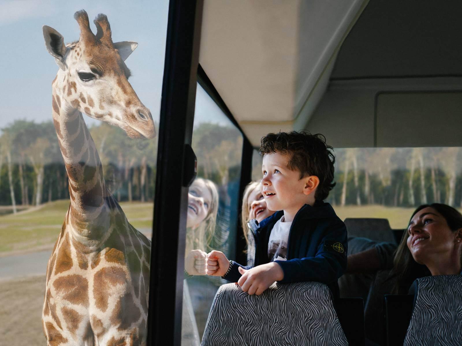 Beekse Bergen safari met de bus en de kinderen